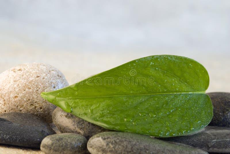 Download Foglio verde immagine stock. Immagine di macro, lush, copia - 7323321