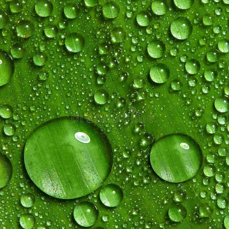 Foglio verde con le gocce di acqua fotografia stock libera da diritti