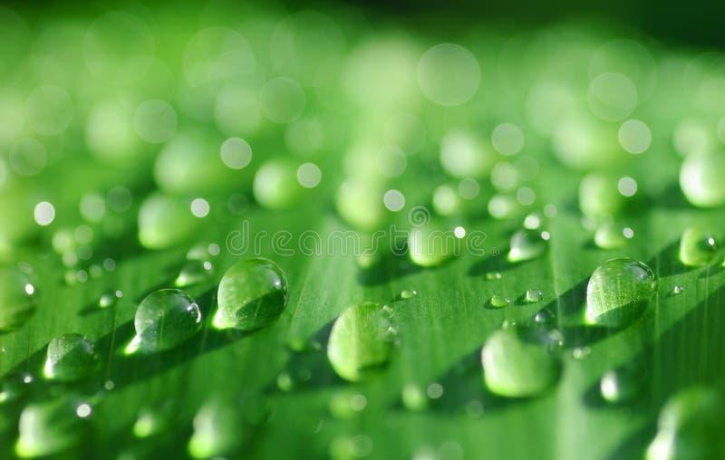 Foglio verde con le gocce di rugiada di mattina. fotografia stock libera da diritti