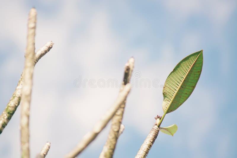 Foglio verde contro il cielo blu immagine stock libera da diritti