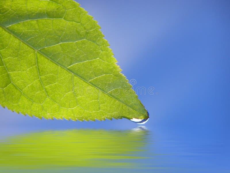 Foglio verde contro priorità bassa blu immagine stock libera da diritti