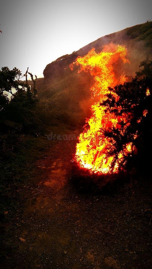 Fogo de Bush fotos de stock