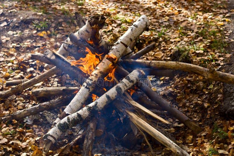 Fogo do acampamento na floresta fotos de stock