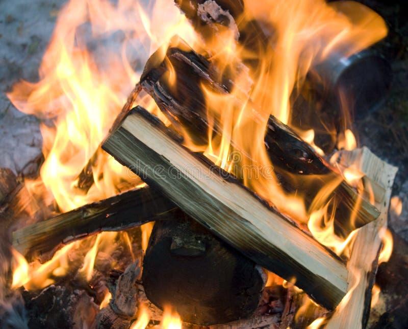 Fogo e lenha na floresta, firecamp fotografia de stock royalty free