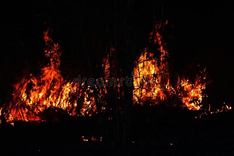 Fogo, floresta ardente do fogo, incêndio florestal no foco seletivo da noite fotos de stock
