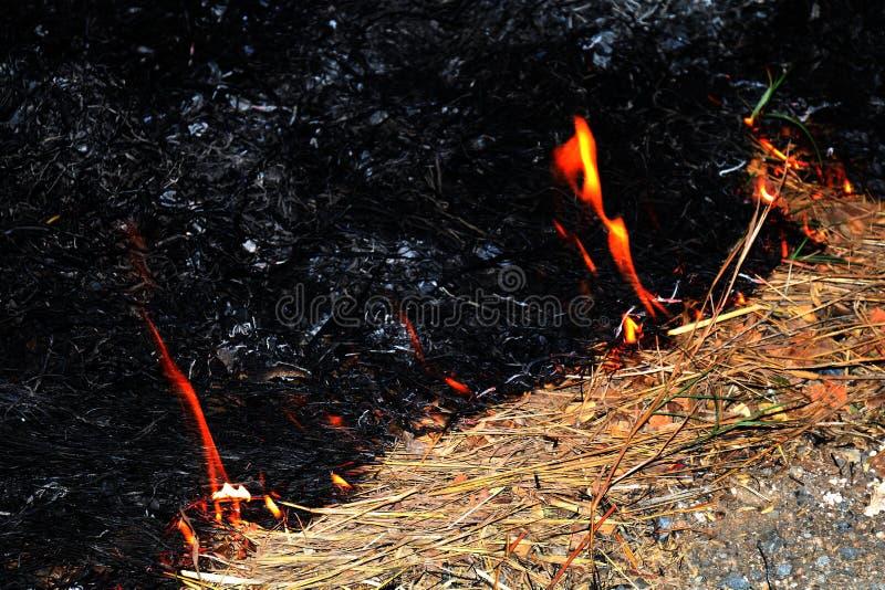 Fogo, foco seletivo do feno ardente do fogo foto de stock