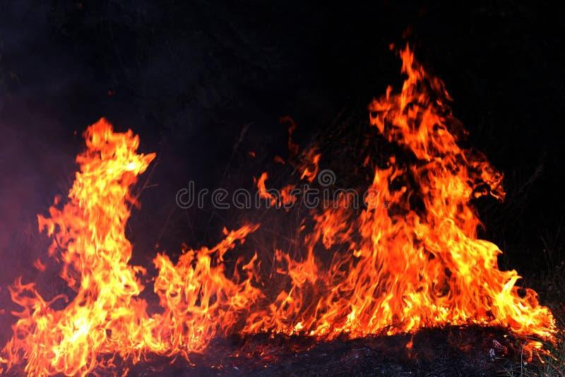 Fogo, incêndio florestal na noite, foco seletivo do feno ardente do fogo imagem de stock royalty free