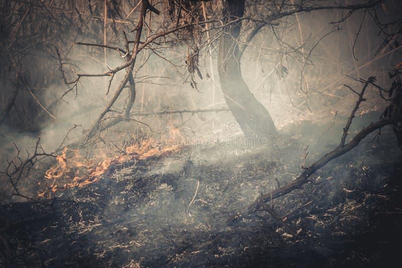 Fogo na floresta foto de stock royalty free