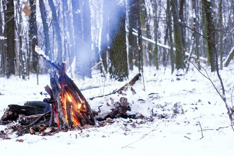 Fogo na floresta do inverno imagens de stock