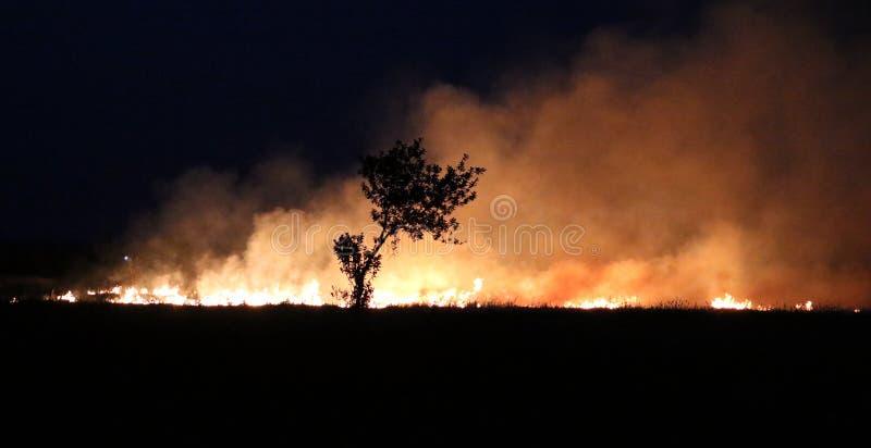 Fogo nos campos da colheita que fazem a nuvem do fumo enorme que causa a poluição do ar e o aquecimento global fotos de stock royalty free