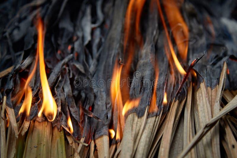 Fogo que queima as folhas secas foto de stock