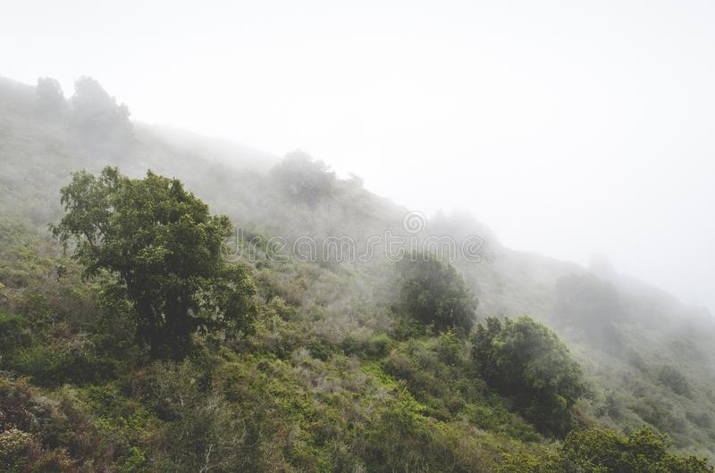 Fogs On Green Green Trees Over The Mountain Free Public Domain Cc0 Image
