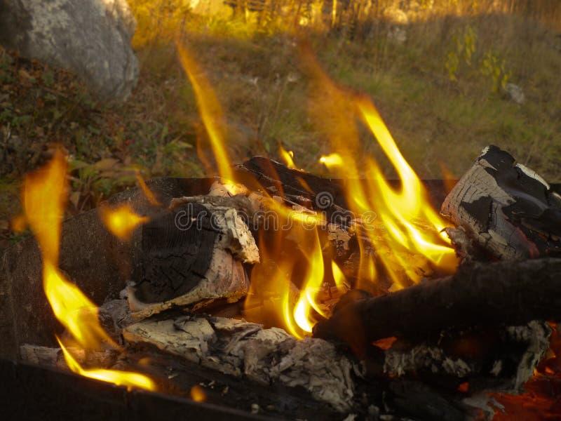 fogueira no magnal e nos carvões Na floresta fotos de stock royalty free