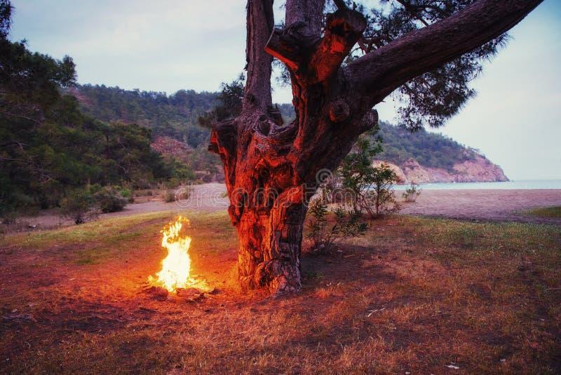Fogueira sob uma árvore perto da costa imagem de stock