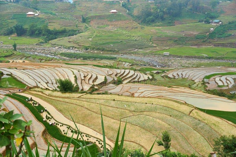 Fogy τοπίο Ricefields στο λαοτιανό valey sapa chai στο Βιετνάμ Sapa, Βιετνάμ - 22 mai 2019 στοκ εικόνα