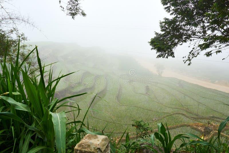 Fogy τοπίο Ricefields στο λαοτιανό valey sapa chai στο Βιετνάμ Sapa, Βιετνάμ - 22 mai 2019 στοκ εικόνα με δικαίωμα ελεύθερης χρήσης