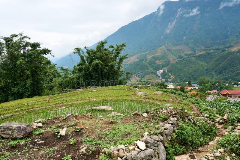 Fogy τοπίο Ricefields στο λαοτιανό valey sapa chai στο Βιετνάμ Sapa, Βιετνάμ - 22 mai 2019 στοκ φωτογραφία