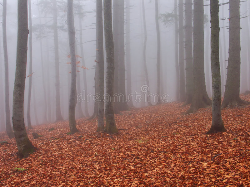 Download FOGY FOREST stock image. Image of mist, season, wood, nature - 7075789