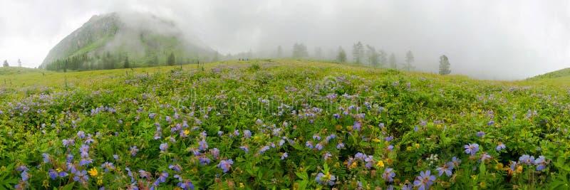 Fogy gebied van blauwe flover op een bewolkte dag cilindrisch 360 graad vr panorama stock foto's