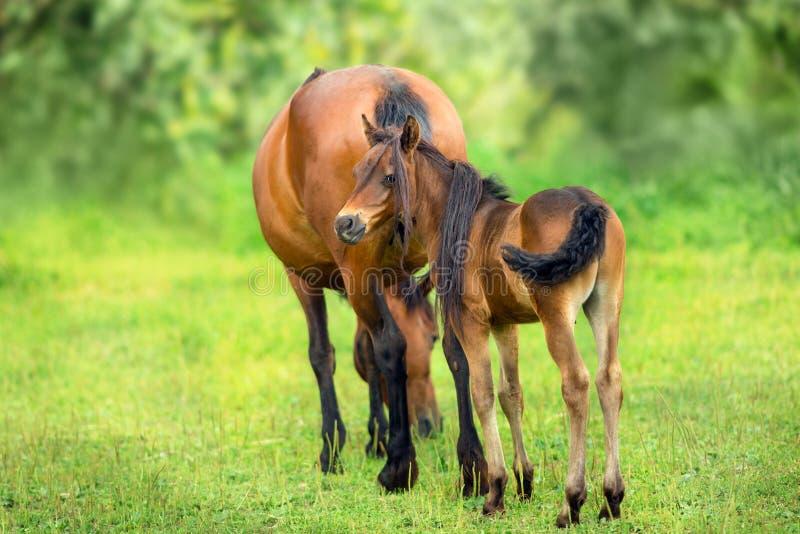 Fohlen und Stute stockfoto