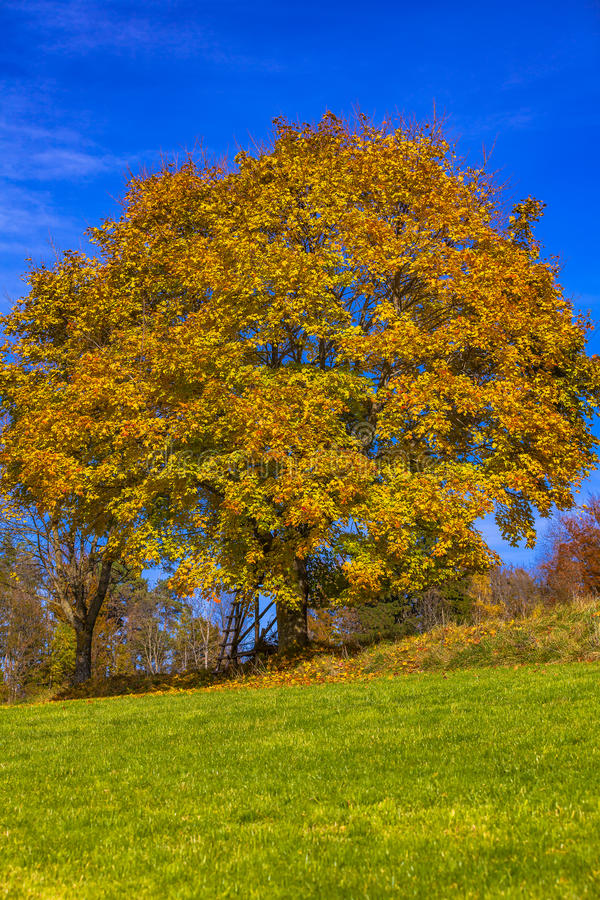 Foilage. View of a tree and foilage stock images