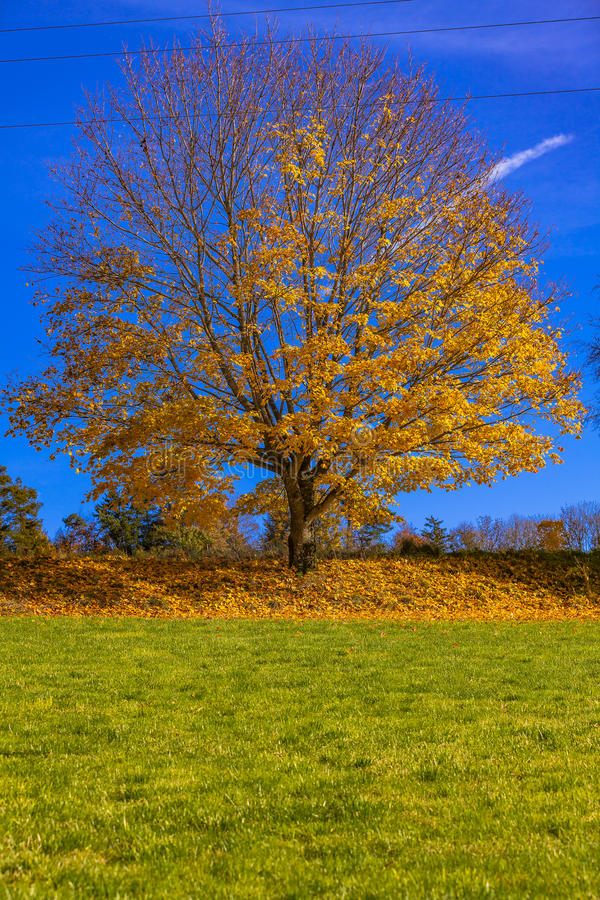Foilage. View of a tree and foilage stock image