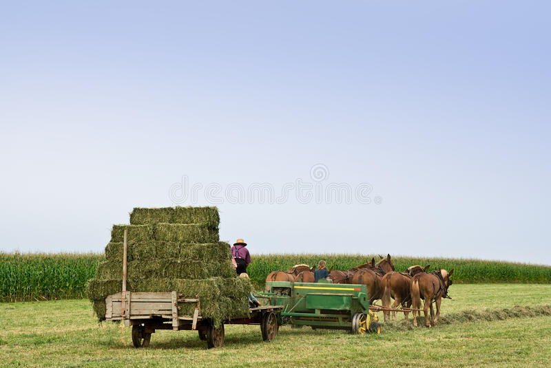 Foin d'emballage photographie stock