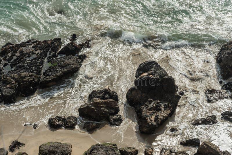 Foki przy punktem Dume, Malibu, Kalifornia fotografia royalty free