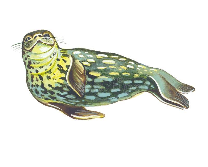 foki weddell royalty ilustracja