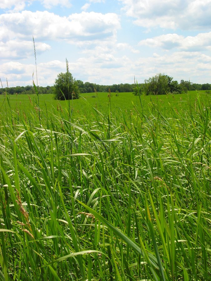 Fokus Auf Dem Gras Lizenzfreie Stockbilder