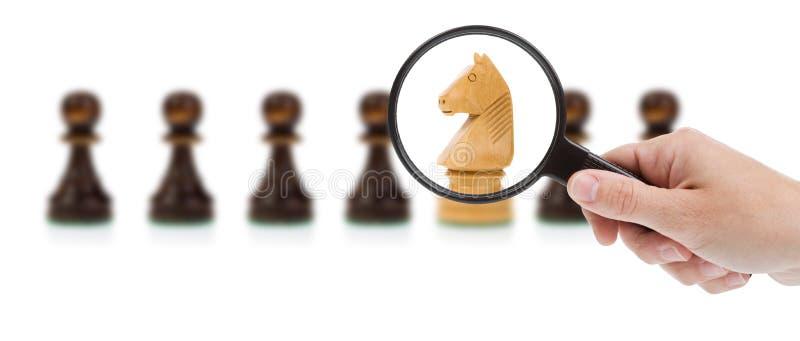 Fokus auf dem Pferd lizenzfreie stockfotos