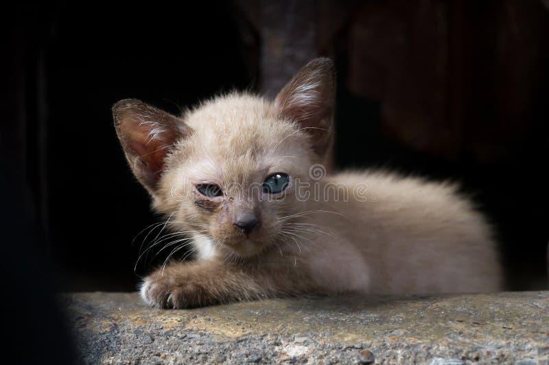 Fokuserar öm ögon för brun kattunge i lågt ljus på ögonen royaltyfria bilder