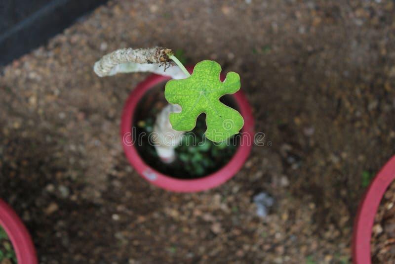 Fokuserat skott på en växt, skarpt skott arkivfoto