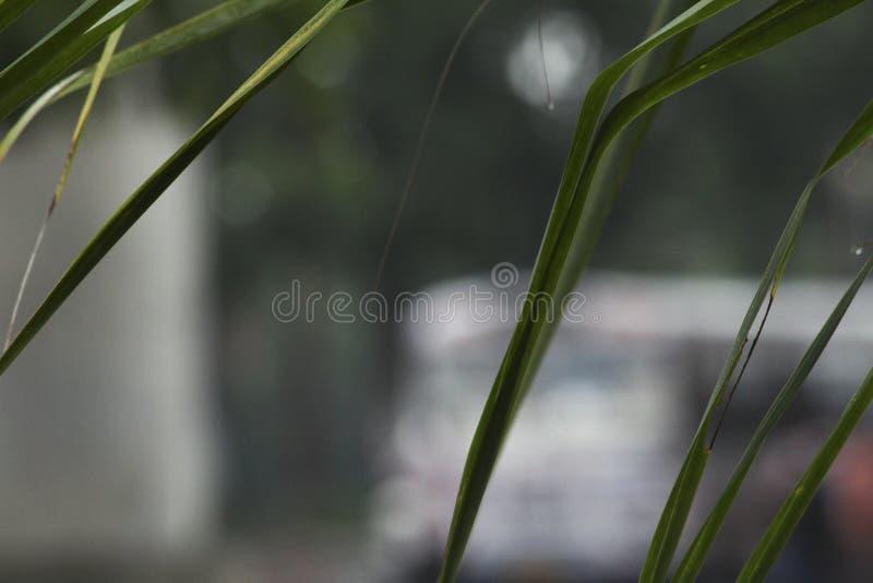 Fokussierte Grünblätter nach Regen stockfoto