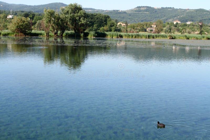 Folaga nel lago Posta Fibreno fotografie stock libere da diritti