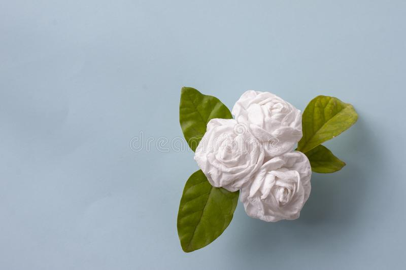 Fold bouquetJasmine flower by toilet paper on for Mother`s Day. Fold bouquetJasmine flower by toilet paper on blue paper background for Mother`s Day royalty free stock photos
