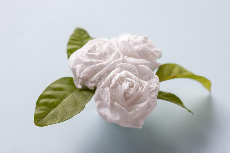 Fold bouquetJasmine flower by toilet paper for Mother`s Day. Fold bouquetJasmine flower by toilet paper on blue paper background for Mother`s Day royalty free stock photography