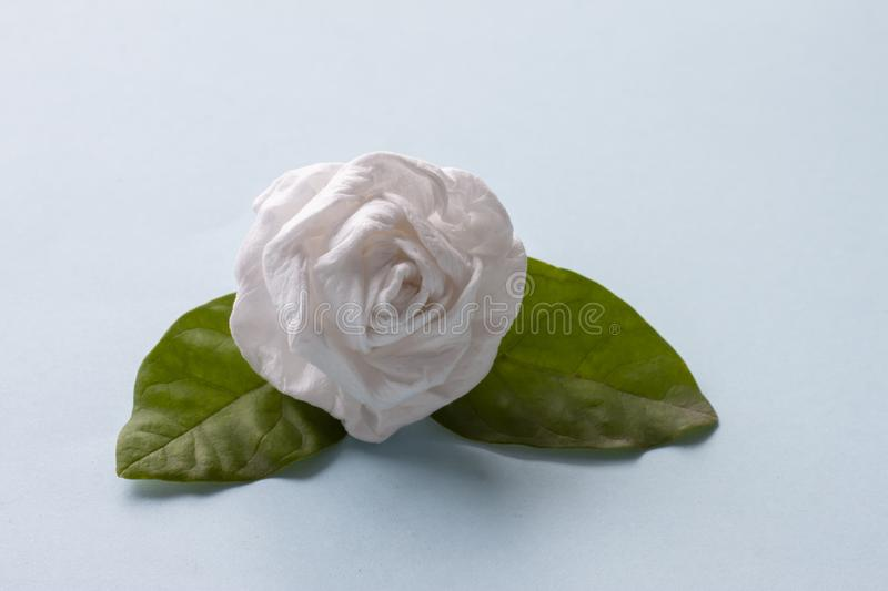 Fold Jasmine flower by toilet paper for Mother`s Day. Fold Jasmine flower by toilet paper on blue paper background for Mother`s Day royalty free stock images