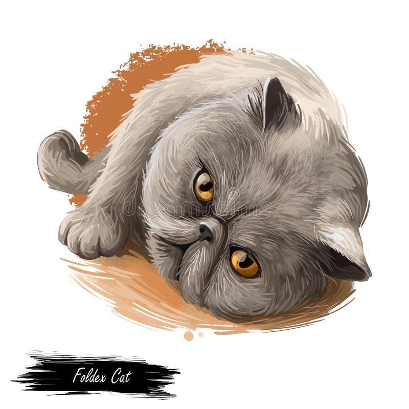 Foldex cat looking isolated on white background. Digital art illustration of hand drawn fold kitty for web. Kitten with ruddy coat royalty free illustration