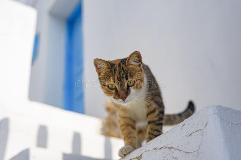FOLEGANDROS ISLAND, CAT. CYCLADES ISLANDS GREECE royalty free stock image