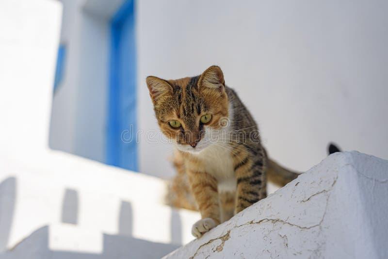 FOLEGANDROS ISLAND, CAT. CYCLADES ISLANDS GREECE stock photography