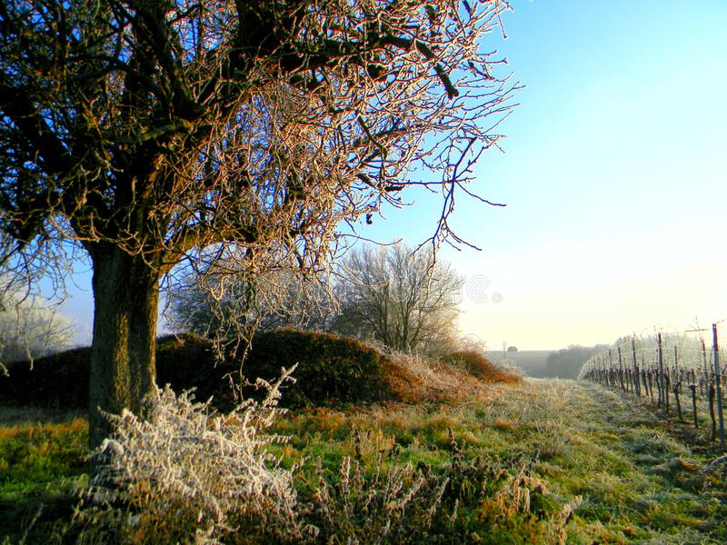 Folgen Sie den Bäumen lizenzfreies stockfoto