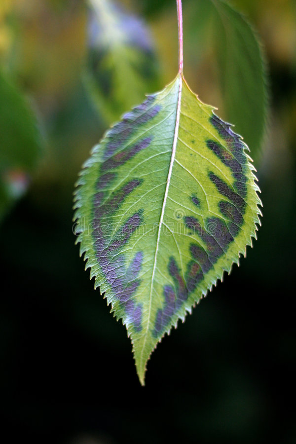 Download Folha foto de stock. Imagem de tired, verde, folhas, sumário - 58186