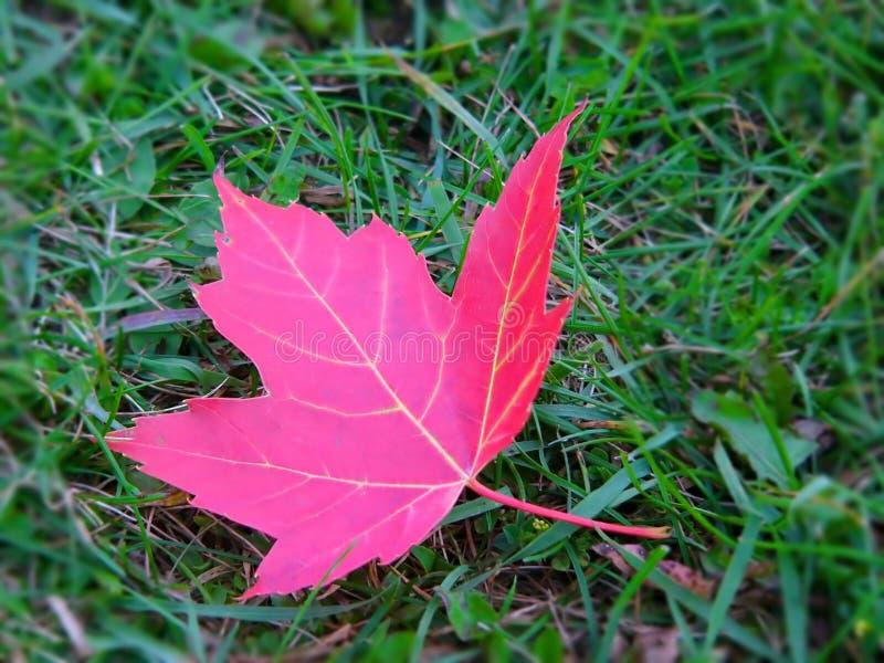Download Folha foto de stock. Imagem de árvore, outono, folhas, queda - 59308