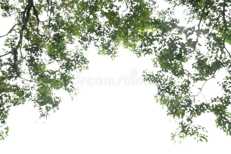 Folha abstrata do verde do close up do borrão isolada no fundo branco do arquivo com trajeto de grampeamento fotos de stock royalty free