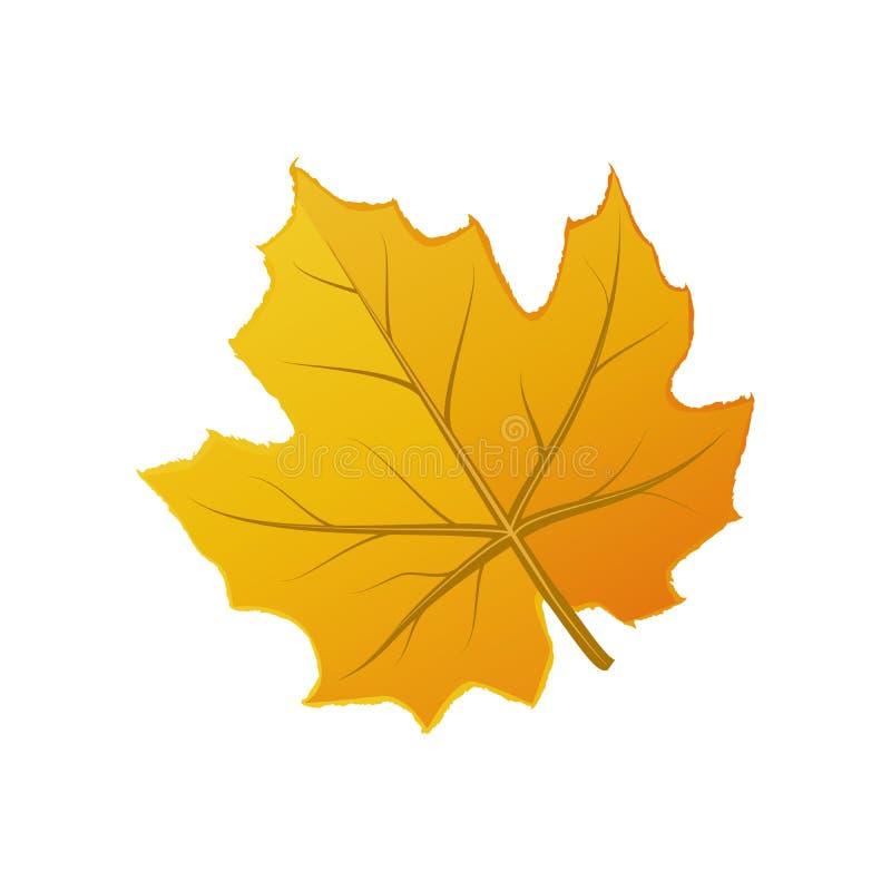 Folha alaranjada bonito do outono isolada no branco ilustração stock