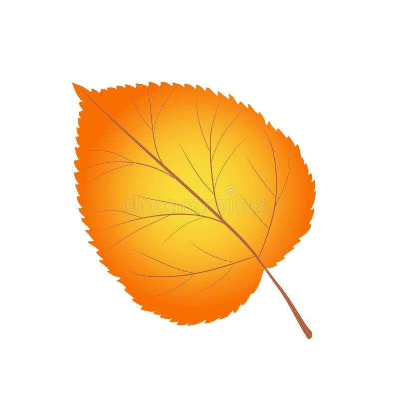 Folha alaranjada brilhante da árvore de vidoeiro amarelo do anf na ilustração branca, conservada em estoque do vetor ilustração do vetor