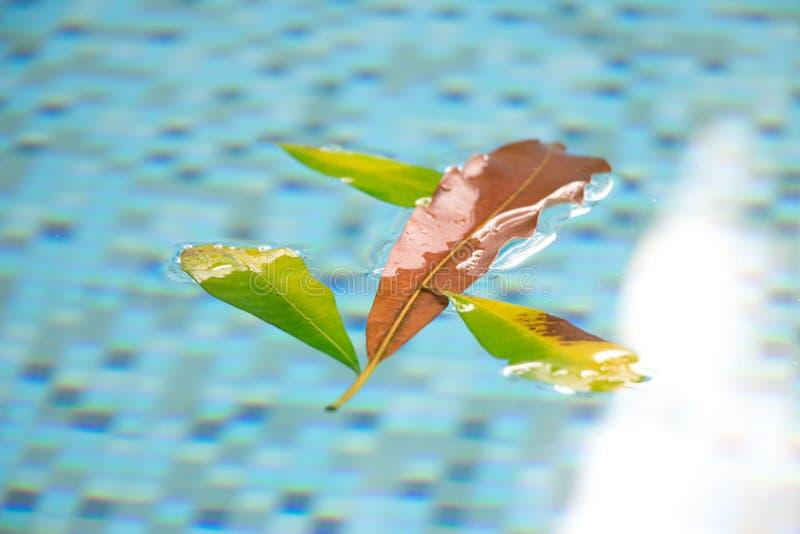 A folha alaranjada que flutua na associação com o outro verde deixa aderir-se sobre em torno dela Esta variedade natural e bonita imagens de stock