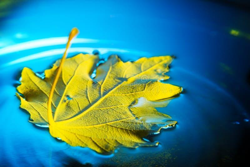 Download Folha amarela imagem de stock. Imagem de sail, espelho - 26501099