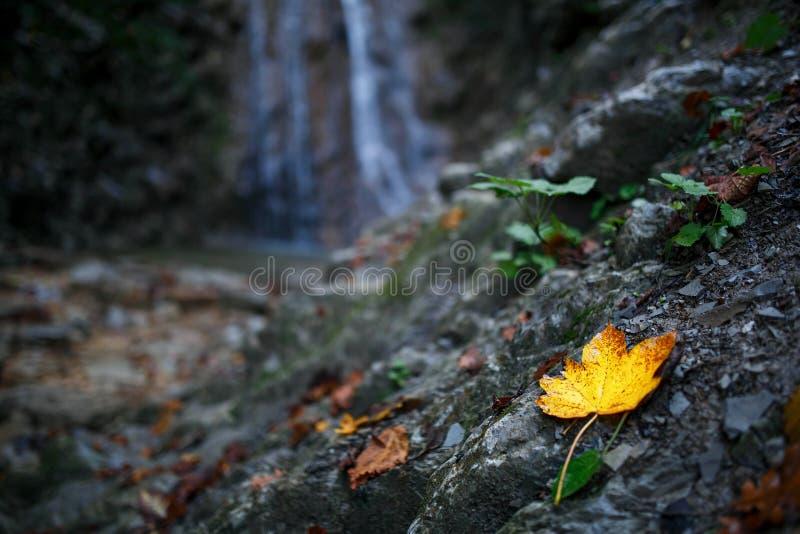 Folha amarela do outono em um fundo da cachoeira imagens de stock
